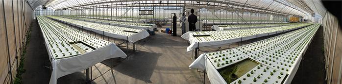農作物栽培用各種ガス